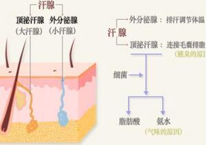 激光治療腋臭會留下小點嗎