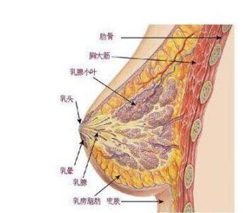 今日头条:做自体脂肪隆胸术
