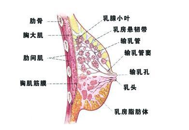 F杯变B杯,减肥真的会减胸么?如果是真的怎么避免胸变小?